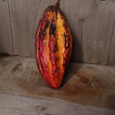 Unprocessed cacao bean