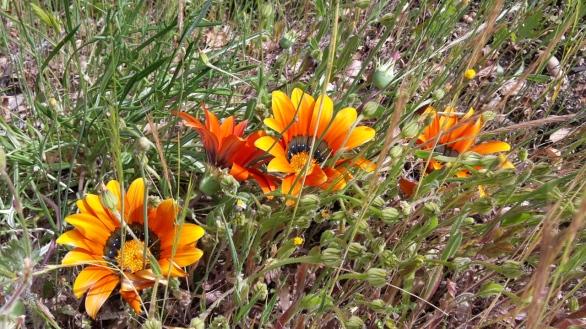 Deer Park, Escondido, CA, USA
