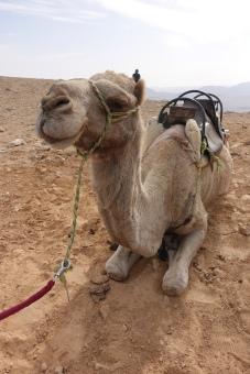 Succah in the desert, Mitzpe Ramon, Israel