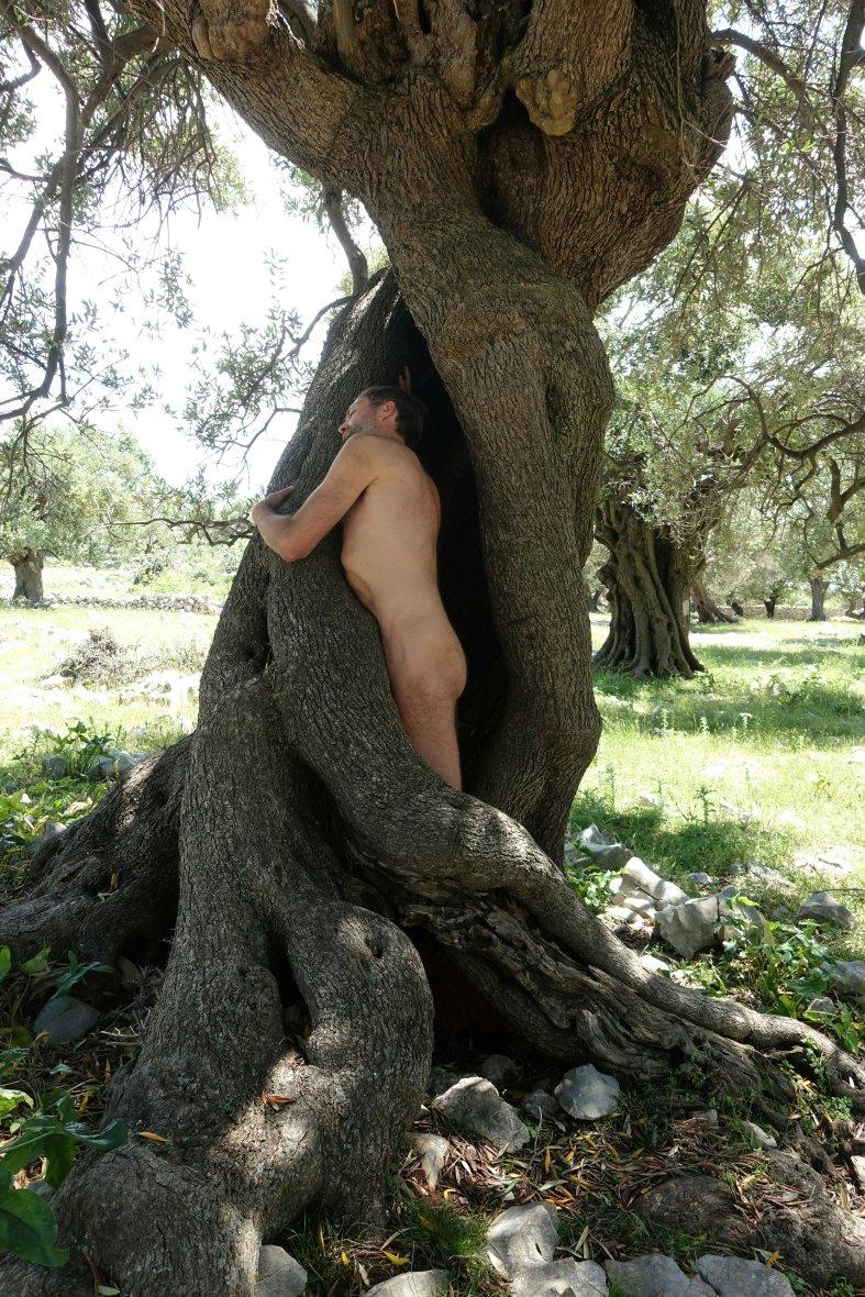 Olive gardens of Lun, Croatia